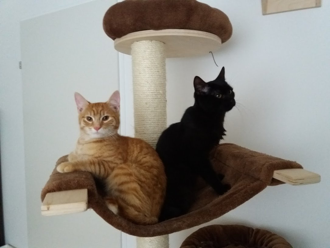 Findus & Merlin